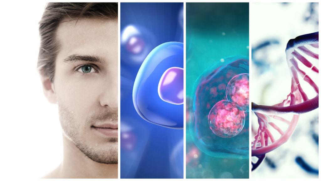 Las ventajas y beneficios de utilizar las células madre para evitar la caída del pelo son inumerables.