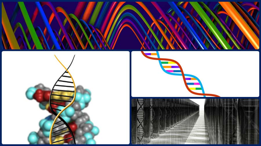 A través del análisis del ADN de la persona puede lograrse una importante pérdida de peso.