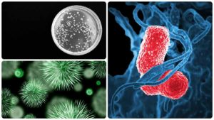 Valores normales de leucocitos