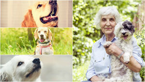 Las terapias con perros suponen un buen ejercicio de relajación para personas con Alzheimer.
