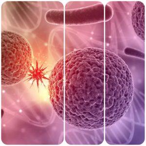 La insuficiente producción de plaquetas en la médula es la principal causa de las plaquetas bajas.