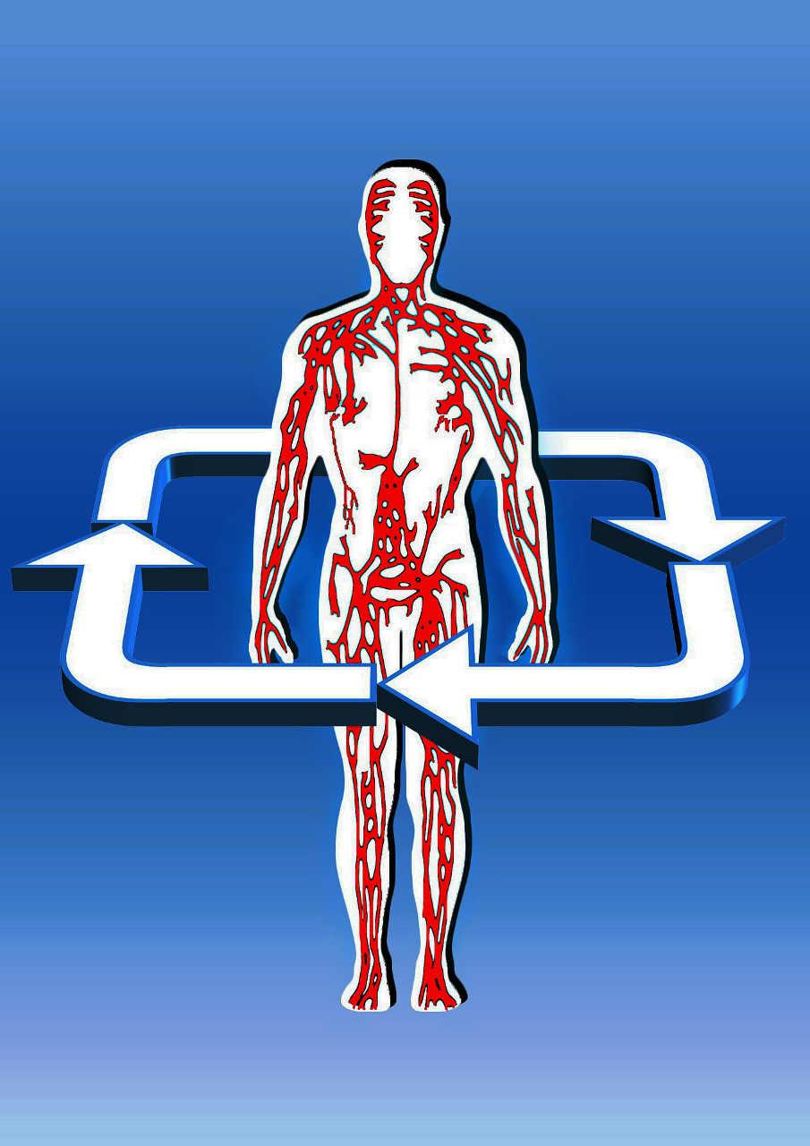 Bajas examen sangre de en plaquetas