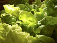La alimentación puede contribuir a subir el número de plaquetas.