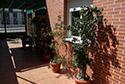 Plantas de la terraza en una residencia de ancianos en Tarragona